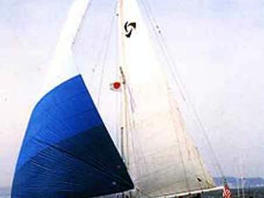 Tayana 37