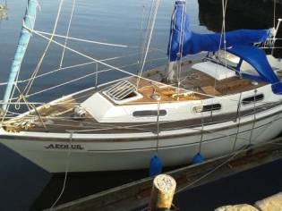 Colivic Countess 28