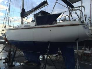 Contest Yachts 33